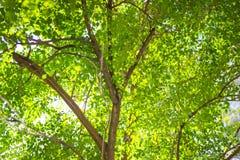 Zusammenfassung der Natur mit dem bokeh Lizenzfreie Stockbilder