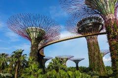 Zusammenfassung u. x22; Super-Trees& x22; Design in Singapur lizenzfreie stockbilder