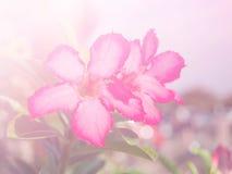 Zusammenfassung undeutlich von der Blume und vom bunten Hintergrund Stockfoto