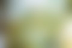 Zusammenfassung unscharfer gelber Hintergrund Lizenzfreie Stockfotos