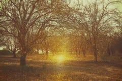 Zusammenfassung unscharfes feenhaftes Holz des träumerischen Geheimnisses und Funkeln bokeh Lichter gefiltertes Bild und gemasert Lizenzfreie Stockbilder