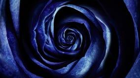 Zusammenfassung von dunkelblauen weichen rosafarbenen Blumenblättern, drehende Blume, nahtlose Schleife Draufsicht von Rosebud hy lizenzfreie abbildung