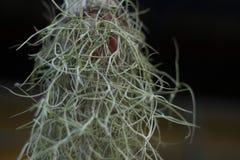 Zusammenfassung von Zimmerpflanzen, spanisches Moos, das im Garten hängt Lizenzfreies Stockbild