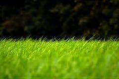 Zusammenfassung zeichnet wachsendes Gras Stockfoto