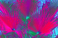 Zusammenfassungs-Neonblumenhintergrund lizenzfreie stockfotografie