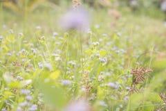 Zusammenfassungsbetriebswiesenfeld und -blumen grünen Blitz bei Sonnenuntergang für im Garten arbeitenden vibrierenden warmen Gar Lizenzfreie Stockfotos