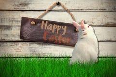 Zusammengesetztes Bild der hinteren Ansicht des netten Kaninchens Lizenzfreie Stockfotos