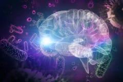 Zusammengesetztes Bild der Illustration 3d des menschlichen Gehirns Lizenzfreie Stockbilder