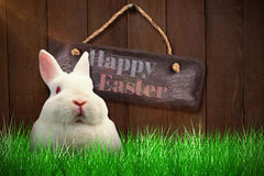 Zusammengesetztes Bild des Abschlusses herauf Porträt des Kaninchens Stockfotografie