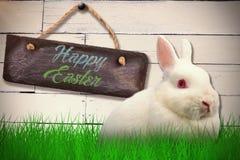 Zusammengesetztes Bild des Abschlusses herauf Porträt des netten Kaninchens Stockfotografie