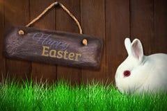 Zusammengesetztes Bild des Abschlusses oben des Kaninchens Stockfotografie