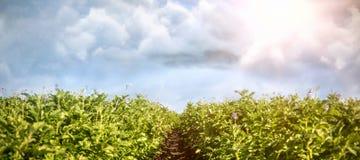 Zusammengesetztes Bild des Bildes der Wolke Lizenzfreies Stockbild