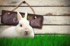 Zusammengesetztes Bild des Kaninchens über weißem Hintergrund Stockbilder