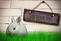 Zusammengesetztes Bild des Kaninchens gegen weißen Hintergrund Lizenzfreie Stockbilder