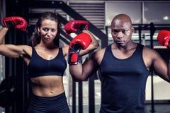 Zusammengesetztes Bild des Porträts der Boxer, die Muskeln biegen Stockbilder