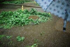 Zusammensetzung der Pfütze, des nassen Grases und des Metalleinsteigelochs mit umbrela im Vordergrund während des starken Regens  Stockfotos