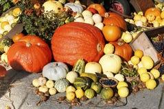 Zusammensetzung des bunten Gemüses Kürbis, Trauben, Zucchini lizenzfreie stockfotografie