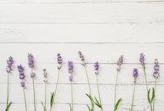 Zusammensetzung des Lavendels auf weißem hölzernem Hintergrund Grenze von frischen Sommerblumen Freier Raum lizenzfreies stockbild
