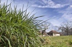 Zusammensetzung mit Frühlingsgras Stockfoto