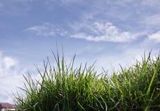 Zusammensetzung mit Frühlingsgras auf Hintergrund des blauen Himmels Stockbild