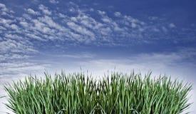 Zusammensetzung mit Frühlingsgras auf Hintergrund des blauen Himmels Stockfoto
