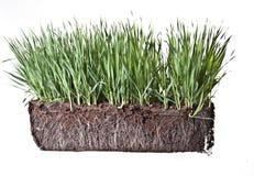 Zusammensetzung mit Gras und Kompost Stockbilder