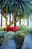 Zusammensetzung mit Kaktus im Gewächshaus Stockfoto