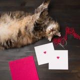 Zusammensetzung mit Katze und zwei leere Karten mit Filzherzen auf ihr lizenzfreie stockfotos