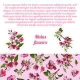 Zusammensetzung mit nahtlosem Muster und Aufklebern der blühenden rosa Niederlassung des Apfelbaums und der Blumen Hand gezeichne vektor abbildung