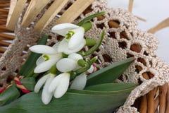 Zusammensetzung mit weißen Blumen Stockbild