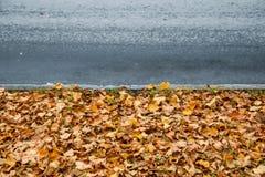 Zusammensetzung vom trockenen Herbstlaub Stockfoto