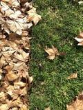 Zusammensetzung von Blättern und von Gras stockbild