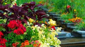 Zusammensetzung von Blumen im Garten Stockbilder