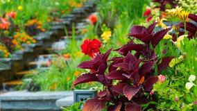 Zusammensetzung von Blumen im Garten Stockbild