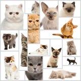 Zusammensetzung von Kätzchen Lizenzfreie Stockfotos