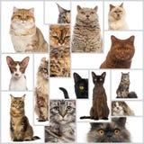 Zusammensetzung von Katzen Lizenzfreies Stockbild