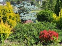 Zusammensetzung von Koniferen- und laubwechselnden Pflanzen Das Design des Gartens Plan des Plans lizenzfreie stockfotografie
