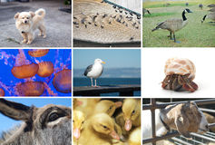 Zusammensetzung von Tier- und Lebewesenbildern Stockbilder