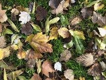 Zusammensetzung von verschiedenen Blättern stockfotografie