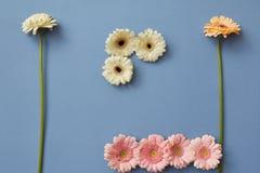 Zusammensetzung von verschiedenen Farben von den Gerberas lokalisiert auf einem Hintergrund des blauen Papiers, Stockbilder