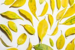 Zusammensetzungsmuster des gelben und grünen Herbstlaubs auf weißem b Stockbild