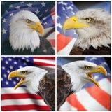 Zusammensetzungsweißkopfseeadler und USA-Flagge Lizenzfreies Stockfoto