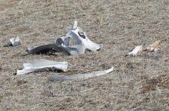 Zusammenstellung der weißen Knochen, die im Sun liegen Lizenzfreies Stockfoto