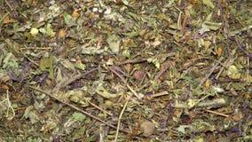 Zusammenstellung des trockenen der drehenden Tees und Kräuter stock video