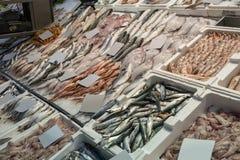 Zusammenstellung von frischen Fischen auf Eis Lizenzfreie Stockfotografie