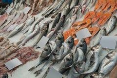 Zusammenstellung von frischen Fischen auf Eis Stockfotografie