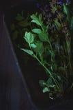 Zusammenstellung von frischen Kräutern Stockfotos