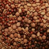 Zusammenstellung von geschmackvollen HartSHELL-Früchten Stockfoto