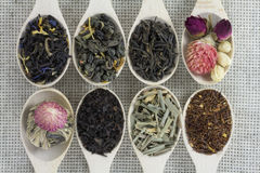 Zusammenstellung von verschiedenen Arten des Tees in einem hölzernen Löffel Lizenzfreie Stockbilder