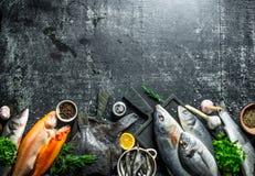 Zusammenstellung von verschiedenen frischen Fischen stockbilder